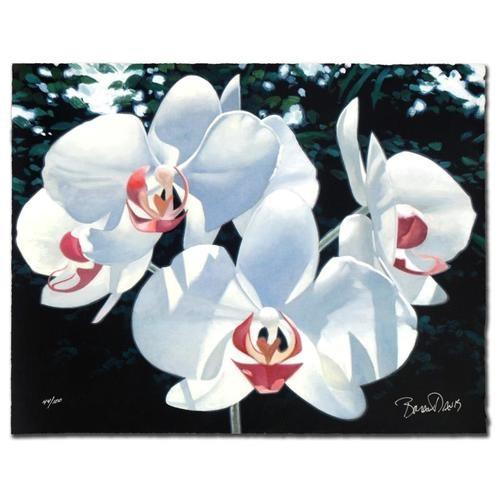 """Davis -""""Four Phalaenopsis"""""""