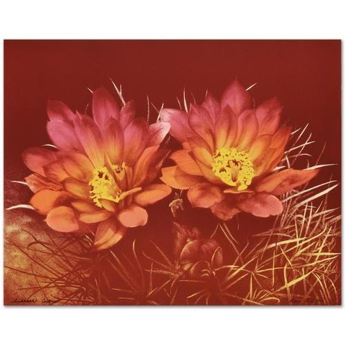 Trenton Fishhook Cactus